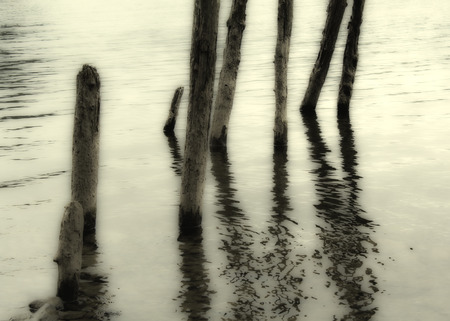 pilings: Abstract of wooden pilings, Derwentwater, Lake District
