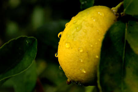 Wet Lime Growing Stock Photo - 562347