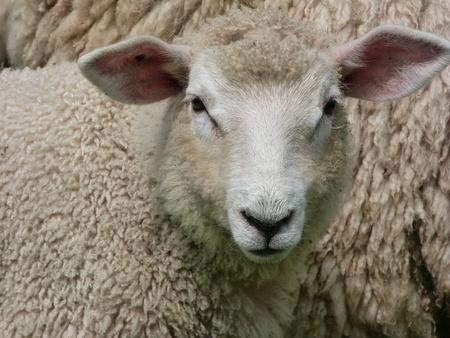 romney: Face of Romney Lamb