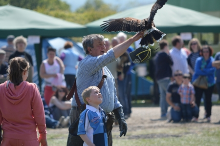 fayre: Birds of Prey at The Cuckoo Fayre Laughton May 2013
