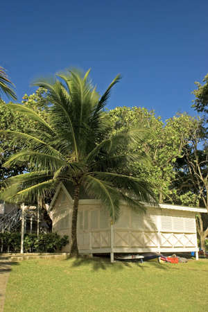 chattel: palm tree and chattel house