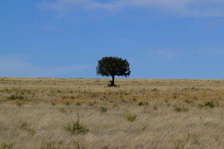Lonely tree in the desert against the sky - USA 版權商用圖片