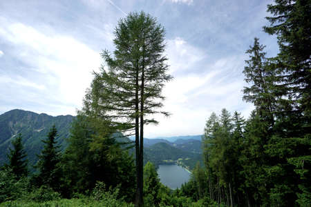 View to a beautiful lake in the mountains / view between the trees / Lunzer See