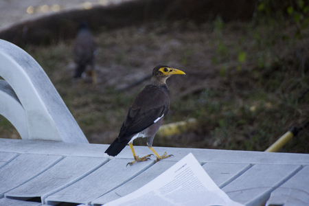 Bird with a yellow beak on a bench next to the opened book
