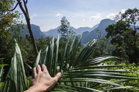 Beautiful tropical landscape, and thus hand plant, Thailand Banco de Imagens