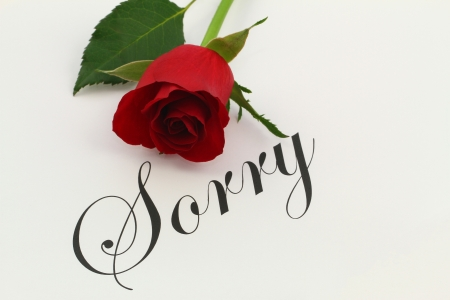 pardon: Sorry with red rose Stock Photo
