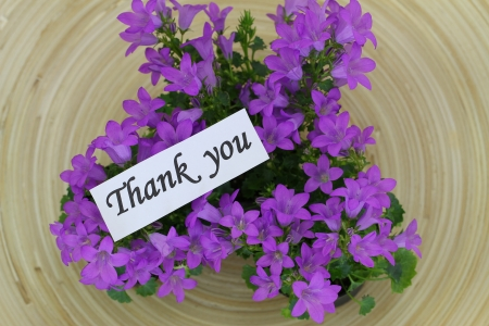 thank you note: Thank you note with Campanula bell flowers