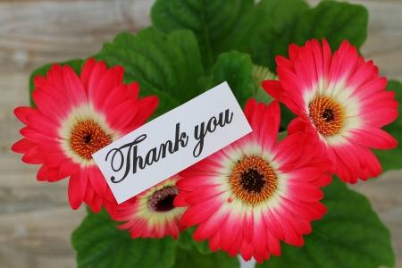 merci: Merci noter avec des gerberas Banque d'images