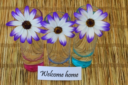 senecio: Welcome home note and Senecio flowers