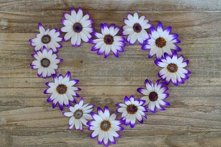 senecio: Heart made of Senecio flowers on wooden background