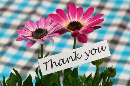 Thank you card with pink gerbera daisies photo