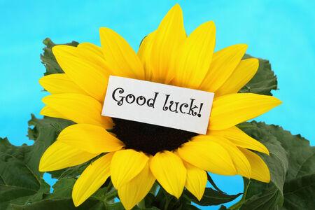 buena suerte: Buena tarjeta de la suerte en el girasol