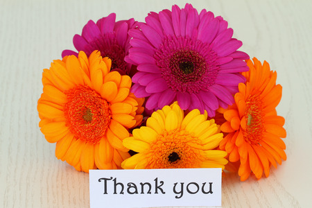 thank you note: Thank you note with colorful gerbera daisies