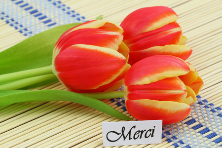 merci: Merci card, which means thank you in French, with three red and yellow tulips
