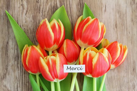 merci: Merci card, which means thank you in French, with red and yellow tulips