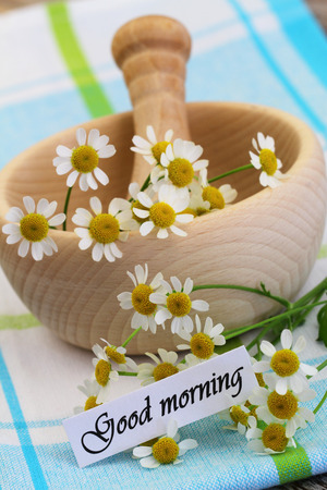 woodenrn: Good morning card with fresh chamomile flowers