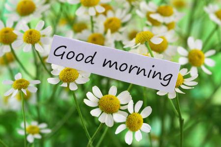 buena salud: Buena tarjeta de la ma�ana con flores de manzanilla
