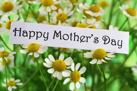Happy Mother\'s Day with chamomile flowers Stock Photo