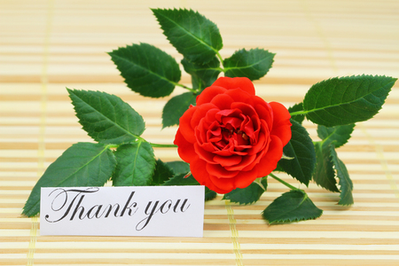 wild rose: Thank you card with red wild rose