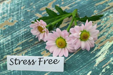 stress free: Stress free card with pink daisies on rustic wooden surface