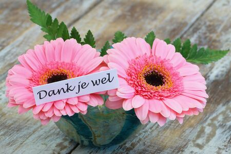 gerbera daisies: Thank you-which Means thank you in pink gerbera daisies with Dutch