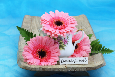 gerbera daisies: Thank you thank you in pink gerbera daisies with Dutch Stock Photo