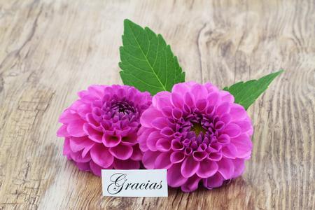 dahlia: Gracias (gracias en español, lo que significa) tarjeta con flores de color rosa dalia Foto de archivo