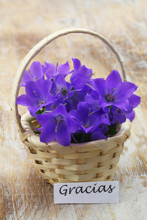 Gracias (thank you in Spanish) card with miniature wicker basket filled with purple campanula bell flowers on wooden surface