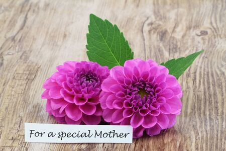 For a special Mother card with pink dahlia flowers on wooden surface Standard-Bild - 133965763