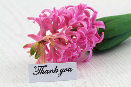 Thank you card with pink hyacinth flower