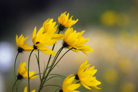 frhling: Yellow Flowers Stock Photo