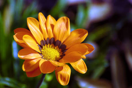 blumen: Flower in the Sun Stock Photo