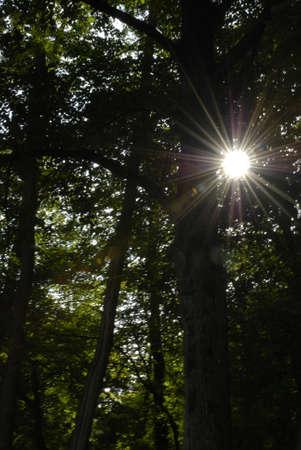 shafts: Shafts of Sunlight Stock Photo