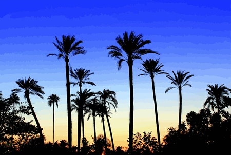 sunset palm trees: A garden of palm trees in Sevilla Illustration