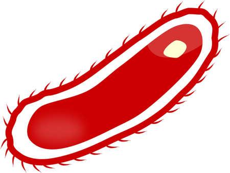 Escherichia coli - EHEC Stock Vector - 9715713
