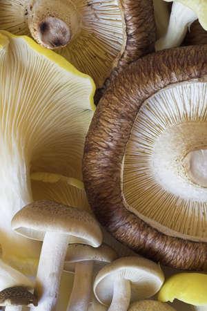 Mushroom Selection