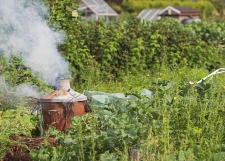 allotment: Burning plant waste on an English allotment