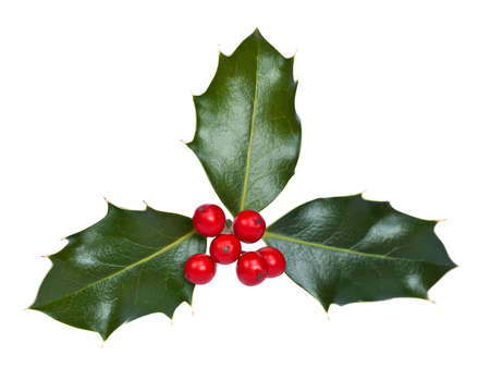 Holly and berries on a white background Stock Photo
