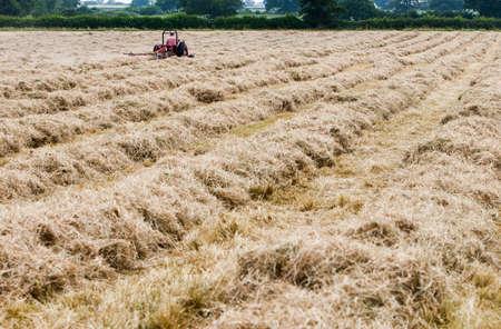 haymaking: Hay Meadow