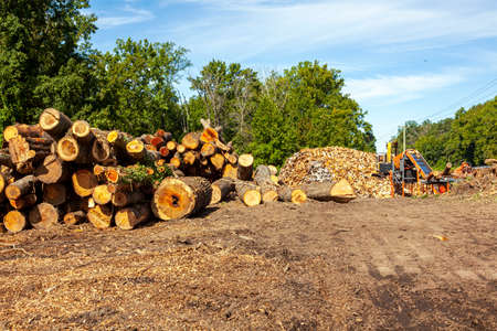 Logging site where trees from nearby forest are chopped and cut into wooden logs. These logs are then made into big piles and an excavator works on it. A concept image for deforestation and forestry.