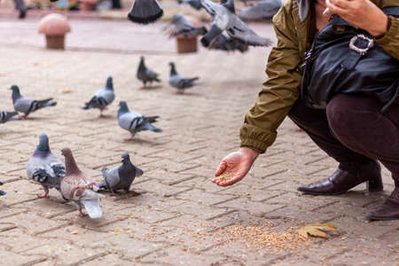 A close up image showing a woman squatting to the ground to offer grains to a flock of doves that are walking around. It is an urban setting with cobblestone streets.