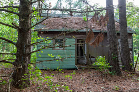 An abandoned very old house in the middle of woods . The one story building is poorly maintained with wooden frame rotting windows and doors broken and fallen pine needles covering the roof. 写真素材