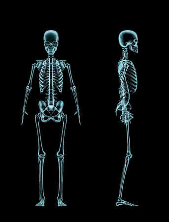 Female skeleton full body x-ray, 3D render of x-rayed female skeleton front and side view Stock Photo