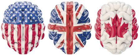 국제 두뇌 미국, 영국 및 캐나다 플래그 장식 된 두뇌의 3D 렌더링