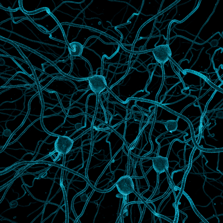nerve cell: Nerve cell background  3D render of nerve cells