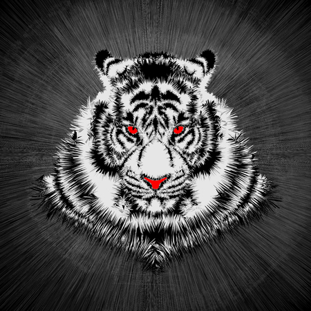grey cat: White tiger head  Vector illustration of white tiger