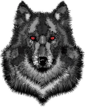 Wild wolf head  Vector illustration of timber wolf Illustration