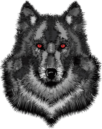 stare: Wild wolf head  Vector illustration of timber wolf Illustration