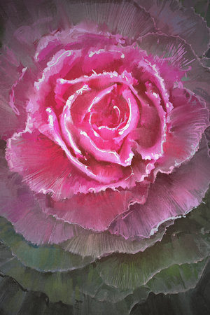 flowering kale: beautiful flowering cabbages,digital painting