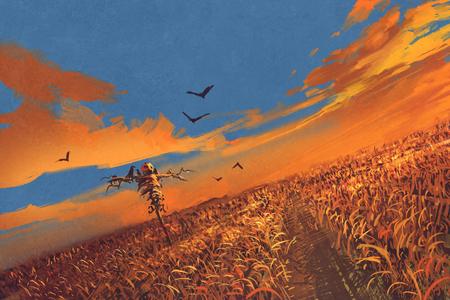 허수 아비와 일몰 하늘, 그림 그림과 옥수수 필드 스톡 콘텐츠